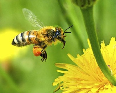 agrotoxicos_abelhas_blog