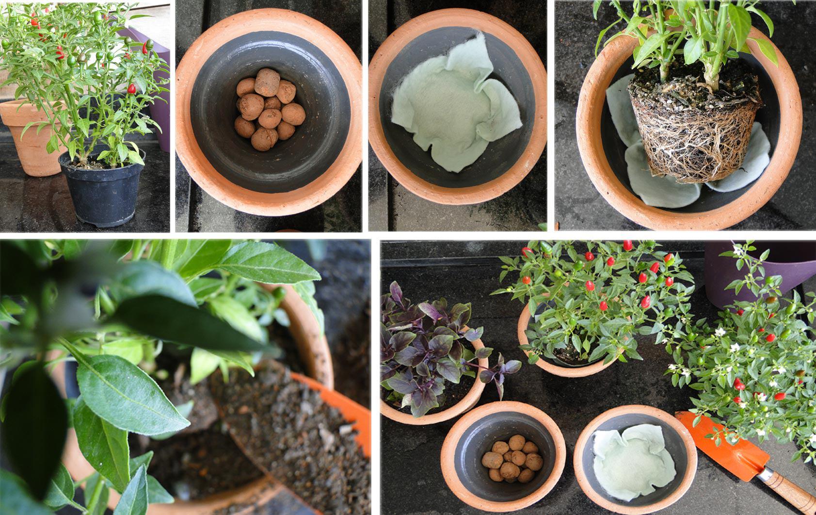 Plantio blog Tudo Sobre Plantas #A75324 1683 1061