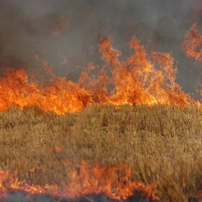 Propane-Field-Burning-290x290