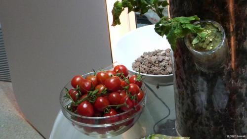 Em terra, os resultados são positivos e os tomates crescem bem nos canteiros experimentais de lava