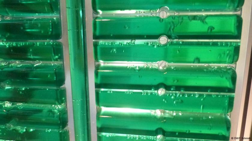 Com a circulação da água, o crescimento acelerado das algas é estimulado no bioreator