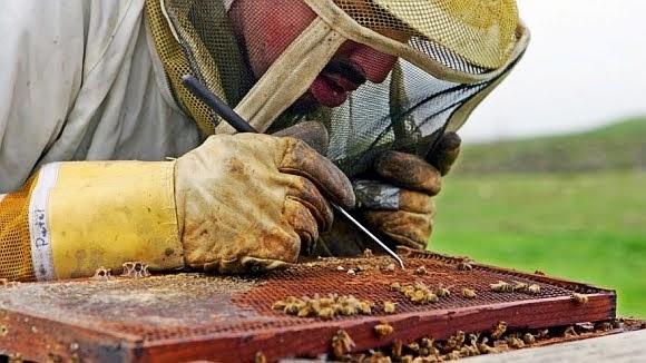 As vendas de fungicidas cresceram mais de 30% e as vendas de inseticidas também cresceram significativamente no Brasil durante o primeiro trimestre de 2013. Divulgou a suíça Syngenta, uma das maiores empresas de agroquímicos e sementes do mundo. Crédito: Ben Margot/AP