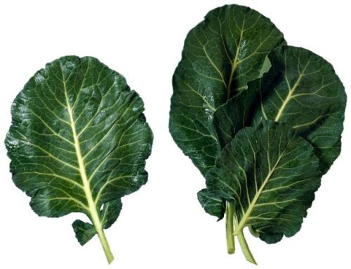 Couve-o-bife-vegetal-2