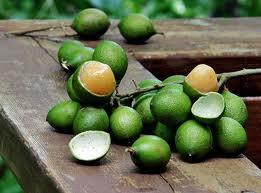 O mamoncillo ou lima-espanhola é uma árvore de fruto da espécie Melicoccus bijugatus. O mamoncillo é indígena de uma vasta área das Américas, que inclui a América Central, a Colômbia e as Caraíbas. A árvore pode crescer até uma altura de 30 metros.(Wikipédia)