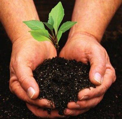 os-fertilizantes-organicos-1