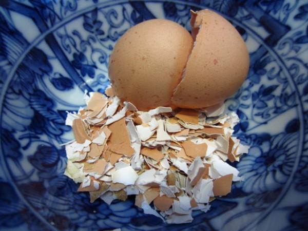usos-de-la-cascara-de-huevo-en-jardineria-01-e1354301588183