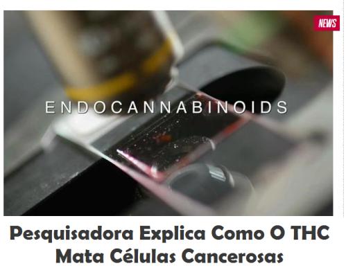 Pesquisadora explica como o THC mata células cancerosas