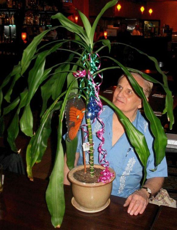 Cleve Backster começou seus experimentos com a planta Draceana (Cortesia de Cleve Backster)