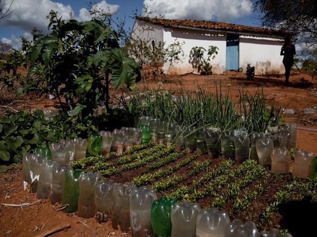 Canteiro em terreno comunitário é usado para plantar durante a seca (Foto: Fernanda Rappa/Divulgação)