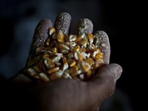 Milho das Sementes da Paixão (Foto: Fernanda Rappa/Divulgação)
