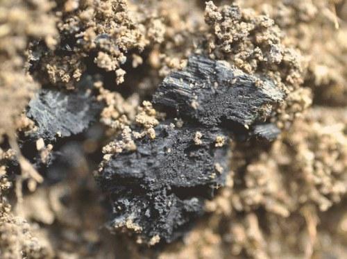 O biocarvão é produzido pelo aquecimento de biomassa na ausência de oxigênio ou com baixos teores desse gás. Esse processo, conhecido como pirólise, permite reter nas cinzas 50% do carbono inicialmente contido na biomassa. (foto cedida pelos autores)