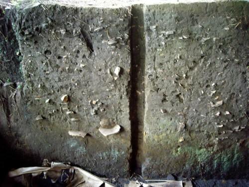 A 'terra preta', formada por índios pré-colombianos, é caracterizada pela cor escura e a presença de fragmentos de artefatos de cerâmica. Ainda não está claro se é resultante de um processo intencional de melhoria do solo ou um subproduto das atividades agrícolas e de habitação desses povos. (foto cedida pelos autores)