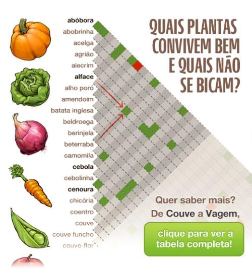 Plantas-companheiras-thumb-ff