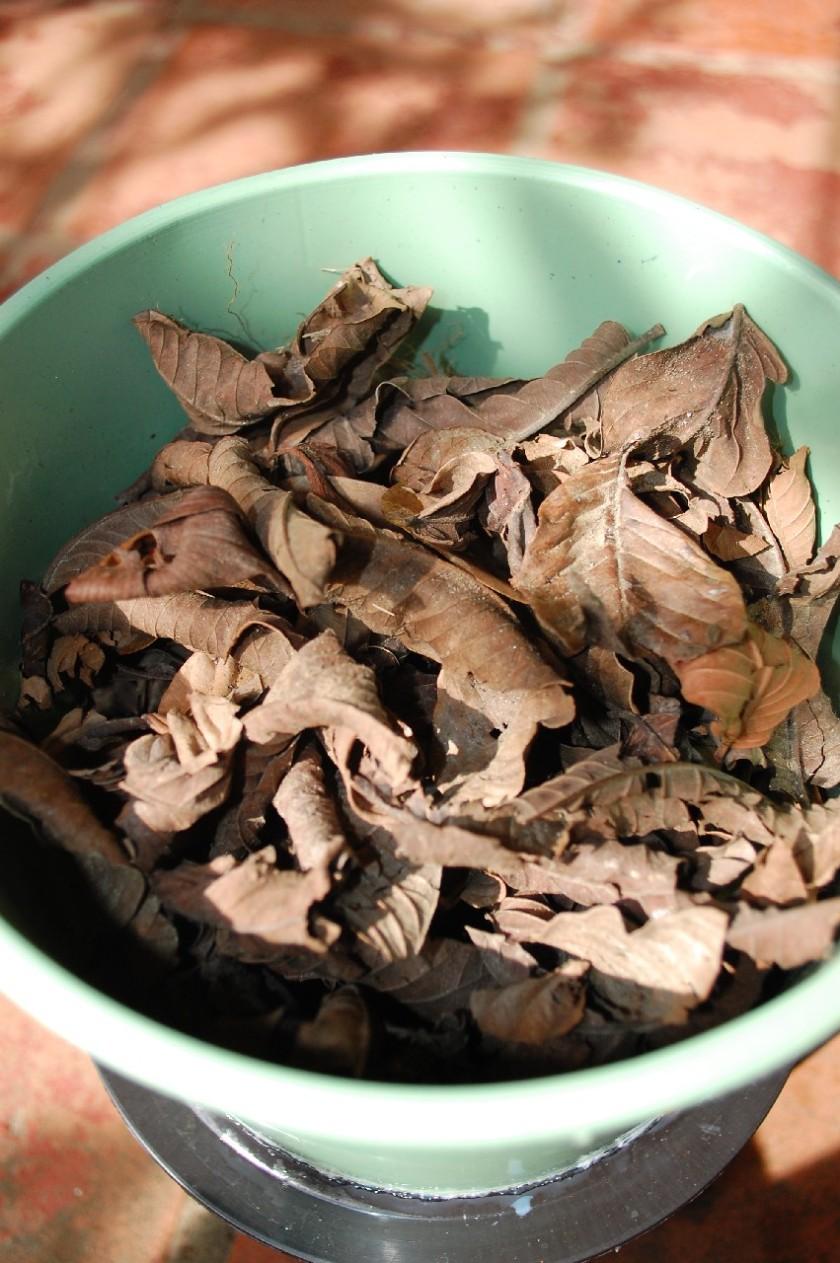 Depois vou enchendo de folhas, galhos, etc. Uma (01) parte de C (carbono) do total de 2.