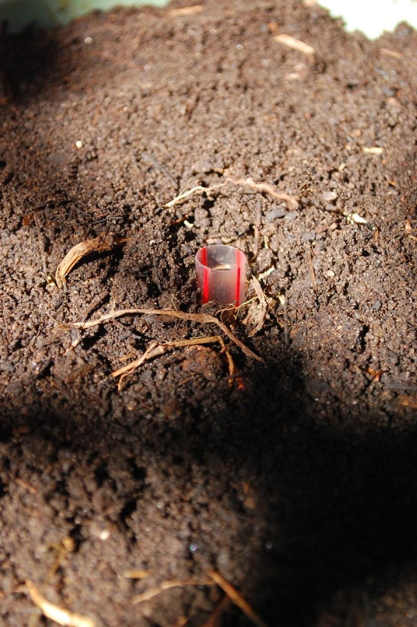 Um pouco de composto (para fornecer micro-organismos) e por cima coloco borra de café, para afastar insetos.