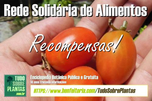 bnr_campanha_2016_rsa_20_recompensas.png
