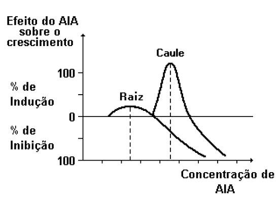 gráfico dos níveis de AIA