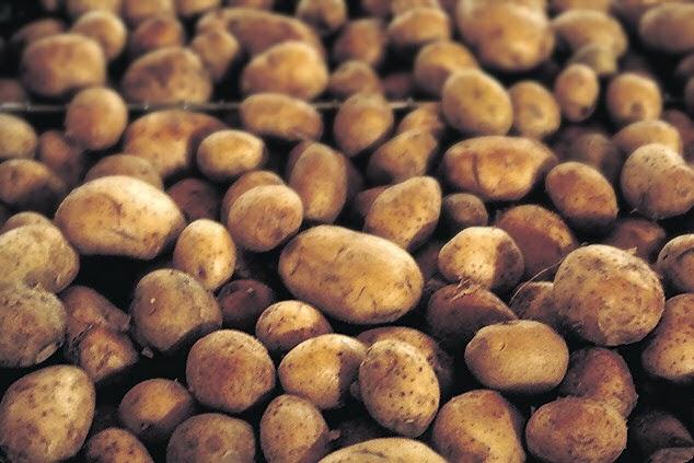batatas burbank