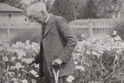 luther_burbank_1900_papaver